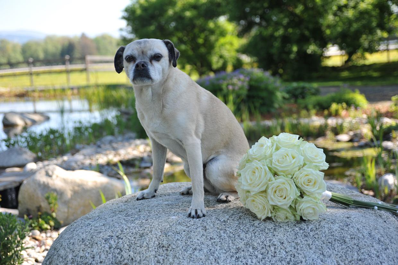 Hochzeitsfloristik Hochzeitsstrauss ein weisser Hochzeitsstrauss aus Rosen liegt auf einem Stein und ein weißer Hund sitzt auf dem Stein